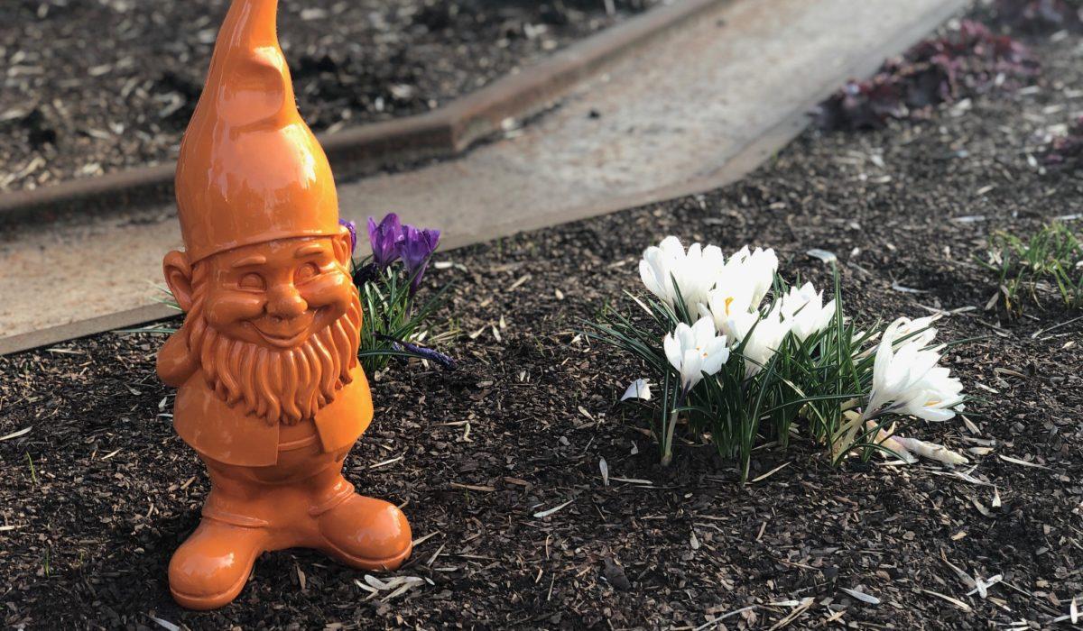 Pierwsze kwiaty wiosny