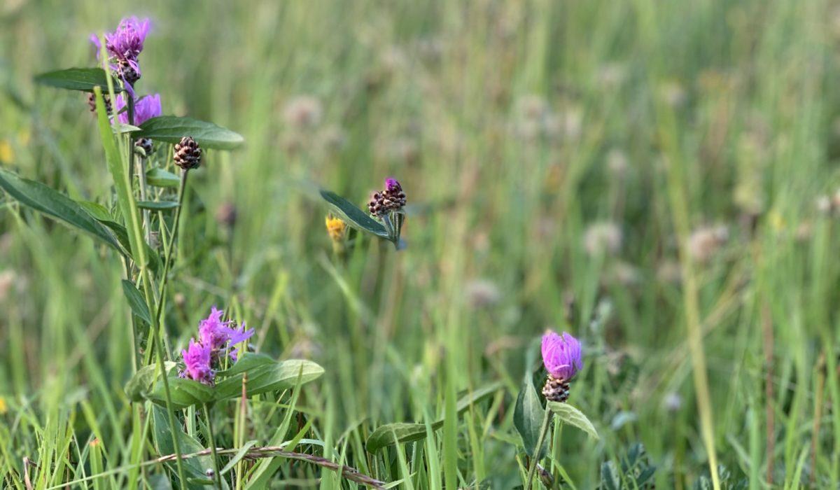 Łąki kwietne – jak założyć aby zachwycały?