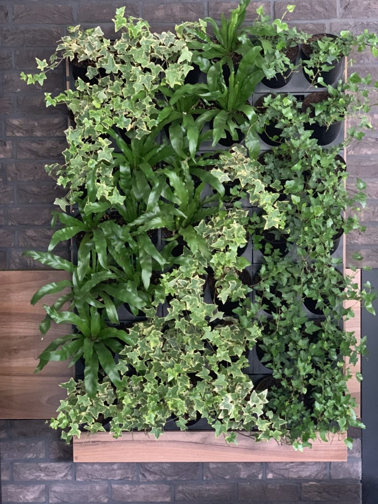 zielona ściana ogrody wertykalne