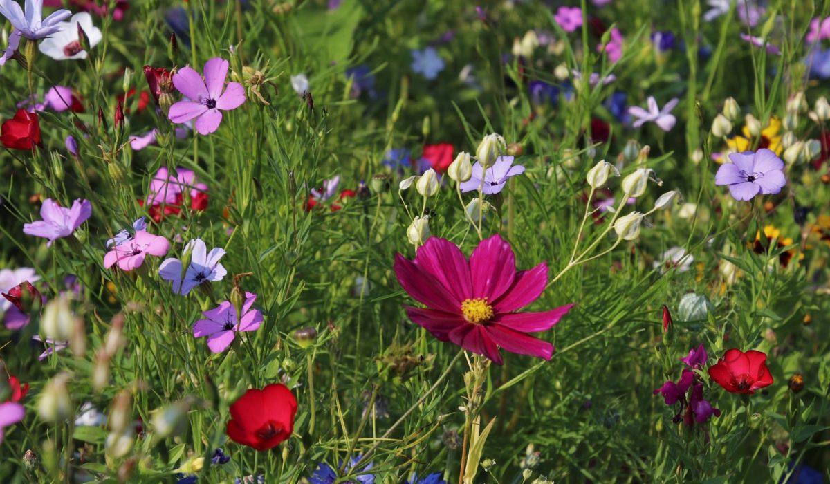 Jak odpowiednio wykonać cięcie traw w naszym ogrodzie?